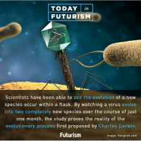 Memes, Evolution, and Evolve: TODAY Tin  FUTURISM  Scientists have been able to see the evolution of a new  species occur within a flask. By watching a virus evolve  into two completely new species over the course of just  one month, the study proves the reality of the  evolutionary process first proposed by Charles Darwin  Futurism  image: thinglink.com repost @futurism