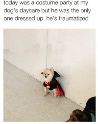 Spooky pupper😈👻🎃: today was a costume party at my  dog's daycare but he was the only  one dressed up. he's traumatized  っ Spooky pupper😈👻🎃