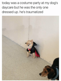 still one of the best tweets ever https://t.co/RjJvpRv9K7: today was a costume party at my dog's  daycare but he was the only one  dressed up. he's traumatized still one of the best tweets ever https://t.co/RjJvpRv9K7