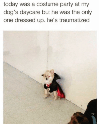 Dogs, Funny, and Party: today was a costume party at my  dog's daycare but he was the only  one dressed up. he's traumatized Awww🐶🧛‍♂️