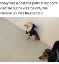 costume party: today was a costume party at my dog's  daycare but he was the only one  dressed up. he's traumatized