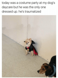 still one of the best tweets ever: today was a costume party at my dog's  daycare but he was the only one  dressed up. he's traumatized still one of the best tweets ever