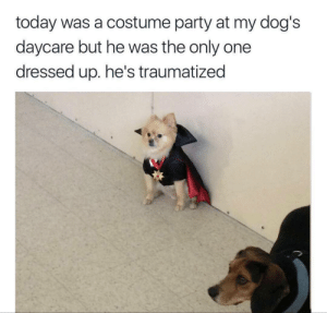 meirl by wouldyoukindlyDeWitt MORE MEMES: today was a costume party at my dog's  daycare but he was the only one  dressed up. he's traumatized meirl by wouldyoukindlyDeWitt MORE MEMES
