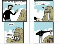 The Fluffy Walrus Memes Collection: Part 1 - How to Kill a Walrus: Today we are going to learn  how to kill a  walrus  Where?  NH  Hey,  you have a spot  here! The Fluffy Walrus Memes Collection: Part 1 - How to Kill a Walrus