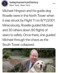 @todayinamericanhistory: todayinamericanhistory  New York, New York  Michael Hingson and his guide dog  Roselle were in the North Tower when  it was struck by Flight 11 on 9/11/2001.  Miraculously, Roselle guided Michael  and 30 others down 80 flights of  stairs to safety. Once there, she guided  Michael through the chaos as the  South Tower collapsed  IG @todayinamericanhistory @todayinamericanhistory