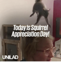 Happy squirrel appreciation day! Here's why squirrels are our favourite little critters 😍🐿: Todayis Squirrel  Appreciation Day!  UNILAD Happy squirrel appreciation day! Here's why squirrels are our favourite little critters 😍🐿