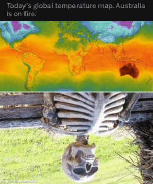 laughoutloud-club:  Australians right now: Today's global temperature map. Australia  is on fire.  made wilh mentauc laughoutloud-club:  Australians right now