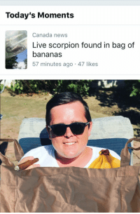 Memes, News, and Canada: Today's Moments  Canada news  Live scorpion found in bag of  bananas  57 minutes ago 47 likes https://t.co/tnDrAeKiIt