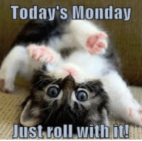 Good Morning Monday: Today's Monda  Just roll with i! Good Morning Monday