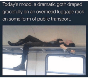 Mood, Tumblr, and Blog: Today's mood: a dramatic goth draped  gracefully on an overhead luggage rack  on some form of public transport whitepeopletwitter: A very relatable mood.