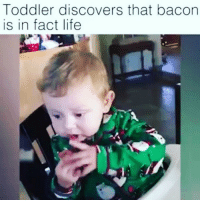 Toddler discovers that bacon  is in fact life I told you'll BACON is life baconislife baconlovers bacon lovers life @dagenius_jay33