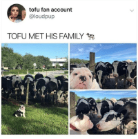 Family, Memes, and 🤖: tofu fan account  @loudpup  TOFU MET HIS FAMILY