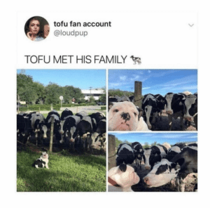 Animals, Dogs, and Family: tofu fan account  @loudpup  TOFU MET HIS FAMILY Dog Memes Of The Day 32 Pics – Ep40 #dogs #dogmemes #lovelyanimalsworld - Lovely Animals World
