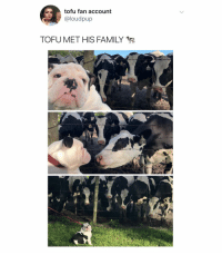 Family, Love, and Dank Memes: tofu fan account  @loudpup  TOFU MET HIS FAMILY  ussi  750 @tofuthebully WE LOVE U TOFU