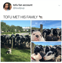 Family, Memes, and Hell: tofu fan account  @loudpup  TOFU MET HIS FAMILY Y the hell arent u following @kalesaladanimals yet