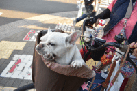 Today, Tokyo, and Hot: Tokyo is hot today so he's just chilling