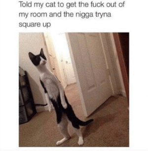 Square Up, Fuck, and Square: Told my cat to get the fuck out of  my room and the nigga tryna  square up Not this again