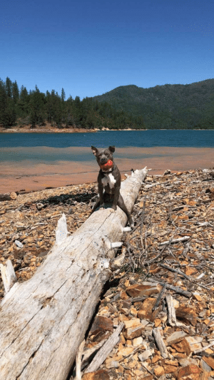 Got, Dog, and Log: Told my dog, Ashe, to sit on the log and this is what I got