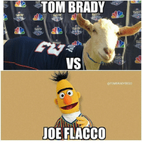 Memes, Tom Brady, and Toms: TOM BRADY  NIC  NIC  VS  NIGH  @TOMBRADYSEGO  JOE FLACCO Almost game time! PC @tombradysego