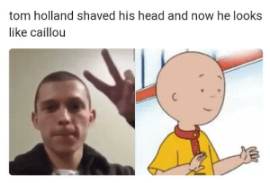 Dk if this counts but..: tom holland shaved his head and now he looks  like caillou Dk if this counts but..