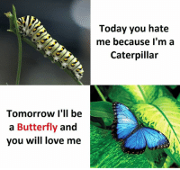 Love, Butterfly, and Today: Tomorrow I'll be  a Butterfly  and  you will love me  Today you hate  me because I'm a  Caterpillar