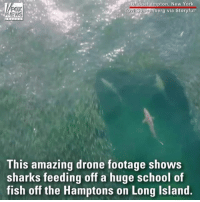 WATCH: Drone footage shows sharks breaking up a massive school of fish off the coast of New York.: ton, New Yor  erg via Storyful  NEWS  This amazing drone footage shows  sharks feeding off a huge school of  fish off the Hamptons on Long Island WATCH: Drone footage shows sharks breaking up a massive school of fish off the coast of New York.