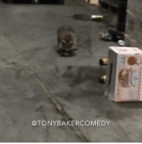 CoCo, Memes, and Raccoon: @TONY BAKER COMEDY Tony Baker as Coco the Raccoon after he had a little too much to drink. TonyBakerVoiceovers