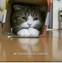 "Memes, Comedy, and 🤖: @TONY BAKER COMEDY Tony Baker as Slidin Silas the cat that has a passion for box Slidin. TonyBakerVoiceovers Song is ""Right Side Of The Bed"" by @oddisee"