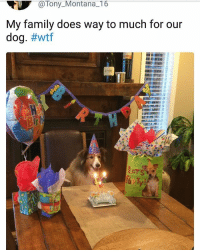 They're doing just enough. | Follow @aranjevi for more!: @Tony_Montana_16  My family does way to much for our  dog. #wtf  iz They're doing just enough. | Follow @aranjevi for more!