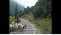 Tony Baker as BertRAM the Ram and his sheep crew. TonyBakerVoiceovers These shepherds better come correct.: @TONYBAKERCOMEDY  07/08/2014 09:54:52 Tony Baker as BertRAM the Ram and his sheep crew. TonyBakerVoiceovers These shepherds better come correct.