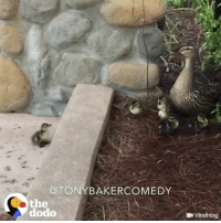 Memes, Duck, and 🤖: TONYBAKERCOMEDY  the  dodo  L Viral Hog Tony Baker as the duck thats just out here tryna make it on MothersDay TonyBakerVoiceovers
