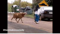Memes, Goat, and Video: @tonybakercomedy This goat video is the first voiceover video I'd ever done. Back in 2013. I had to redo the audio since then but this was the very first video TonyBakerVoiceoverReplay Pt. 1