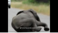 Family, Memes, and Elephant: @TONYBAKERCOMEDY Tony Baker as the family Elephant TonyBakerVoiceovers
