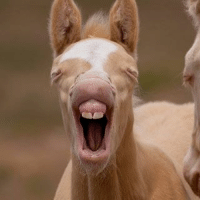 Too Cute Tuesday! Caption this.... TooCute Cute Funny AkChin Cowboy PapaJohns Cowgirl NoBullAuto Horse Farmer Rancher: Too Cute Tuesday! Caption this.... TooCute Cute Funny AkChin Cowboy PapaJohns Cowgirl NoBullAuto Horse Farmer Rancher