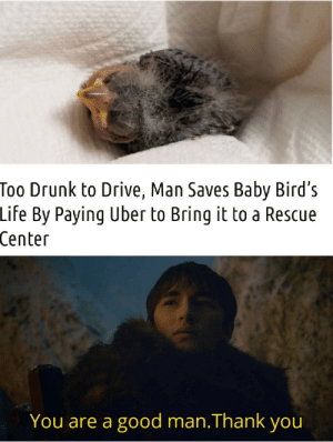 Something wholesome: Too Drunk to Drive, Man Saves Baby Bird's  Life By Paying Uber to Bring it to a Rescue  Center  You are a good man.Thank you Something wholesome
