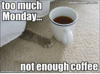 too much  cataddictsanony-mouse  Monday  not enough coffee  www.facebook.com/cat
