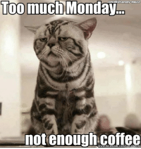 Too much Monday  cataddictsanony-mouse  not enough coffee