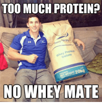 Gym, Life, and Memes: TOO MUCH PROTEINP  for life  Dairy  Protein  he late  ISO  NOWHEY MATE How long would 20kg whey protein last you?