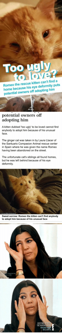 """https://t.co/R9edNvU59s: Too ugly  Romeo the rescue kitten can't find a  home because his eye deformity puts  potential owners off adopting him  RE   potential owners off  adopting him  A kitten dubbed """"too ugly"""" to be loved cannot find  anybody to adopt him because of his unusual  face  The ginger cat was taken in by Laura Llacer of  the Santuario Compasion Animal rescue center  in Spain where he was given the name Romeo  having been abandoned on the street.  The unfortunate cat's siblings all found homes,  but he was left behind because of his eye  deformity.  AnimaVREX/Shutterstock  Sweet sorrow: Romeo the kitten can't find anybody  to adopt him because of his unusual face   re registered  E NETWORK   KEEPING UP WITH  THE KARDASHIANS  BRAND N  HKU https://t.co/R9edNvU59s"""