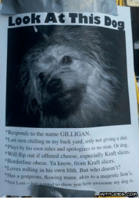 "Chill, Dank, and Dogs: Took At this Dog  *Responds to the name GILLIGAN.  *Last seen chilling in my back yard, srsly not giving a shit.  or dog.  ays by his own rules and apologizes to no man.  ""Will flip out if offered especially Kraft slices.  cheese, ""Borderline obese. Ya from Kraft slices.  ""Loves rolling in his own filth. But who doesn't?  as a gorgeous, flowing mane, akin to a majestic lion  s.  ed to show you how awesome my dog is.  Not Lost-j  jus  WITITUDES CONA"