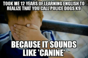 Dogs, Police, and Germany: TOOK ME 12 YEARSOFLEARNING ENGLISH TO  REALIZE THAT YOU CALL POLICE DOGS K9  BECAUSEIT SOUNDS  LIKE CANINE In Germany we call this Aha- Erlebnis