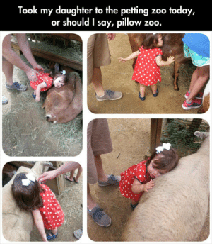 lolzandtrollz:  Her Love For Animals Is Beautiful: Took my daughter to the petting  or should I say, pillow  zoo today,  zoo. lolzandtrollz:  Her Love For Animals Is Beautiful