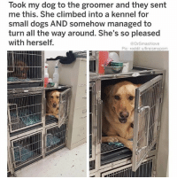 "Bad, Be Like, and Blac Chyna: Took my dog to the groomer and they sent  me this. She climbed into a kennel for  small dogs AND somehow managed to  turn all the way around. She's so pleased  with herself.  @DrSmashlove  Pic: reddit u/fireismyporn Bruh y'all being way too hard on my girl Blac Chyna. See y'all gotta understand, some women...they like secretaries. If u give them a task and they don't wanna do that task...they do a bad job! That's just how some of u women be! My first secretary? I asked her to please make me a binder. The result? Tabs was messed up, everything mishmashed - even the hole punches wasn't aligned 😂. Just skrate to the recycling bin. Lesson learnt: Sally don't do binders 😂. That's Blac Chyna. She didn't like that task. She like ""lemme do this hella mediocrely. Then he gotta start doing something *I* like."" U feel me? Now other women bruh they gon do the most. They could dislike something but for YOU? They love it. I was once laying Pipington to a yung ting and she was visibly into it but after a lil while she kinda broke out of character like ""o babyyyy ... aye baby you close? It's hurting a lil bit 😬 KEEP GOING DON'T STOP!"" ... BRO! I FUXED WITH HER HONESTY LOL! 😂 Bc up until then she was (ostensibly) loving every moment! That right there is a pleaser bruv. But don't get it twisted! U can convert her. If she a pleaser but u inattentive, selfish, and ignore her cues? Guess what now she a secretary. She bad at everything now 😂. ""Sorry I already brushed my teeth and got ready for bed can we not? 😬"" Like one of them old secretaries. Emeritus status lol. Just waiting on her retirement party talmbout ""After 48 years of service Shirley has informed us she's retiring, we will miss her 😌"" like bish don't u mean 38 years of service and 10 years of Shirley talking isht in the coffee room?! 😂 Now then, if u kindly, conscientious and wonderful, she gon convert from a secretary to a pleaser. She gon do things she ain't een really into bc she like YOU! U be like ""wow Stephanie I didn't even know u liked this position lol! Where u learn this? U cheating? Lemme see ya phone 😤 I'LL KILL U *AND* HIM LOLOL JK NAH FR THO WHERE U LEARN THIS 😍."" 😂 U feel me? She gon upgrade HERSELF if she fux with u. Blac Chyna bruh? She don't fux with that dude. For all we know she just paid for dinner AND his car note. Let a woman pay for u she be a secretary REAL QUICK BLESS UP 😂"