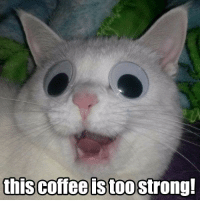 """Omg, Tumblr, and Blog: toostrong! <p><a href=""""https://omg-images.tumblr.com/post/167675720672/strong-coffee"""" class=""""tumblr_blog"""">omg-images</a>:</p>  <blockquote><p>Strong Coffee</p></blockquote>"""