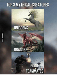 Memes, Unicorn, and Dragons: TOP 3 MYTHICAL CREATURES  UNICORNS  DRAGONS  GOOD  TEAMMATES