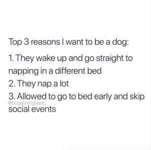 Wake up: SleepGot up from a nap: SleepSocial obligations: Sleep: Top 3 reasons Iwant to be a dog  1. They wake up and go straight to  napping in a different bed  2. They nap a lot  3. Allowed to go to bed early and skip  @dogsbeingbasic  social events Wake up: SleepGot up from a nap: SleepSocial obligations: Sleep