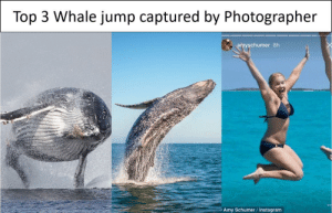 Amy Schumer, Funny, and Hello: Top 3 Whale jump captured by Photographer  amyschumer 8h  Amy Schumer / Instagram Whale hello there Amy