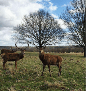 Deer, Magnificent, and Top: Top marks to the deer on the right for a magnificent set of antlers