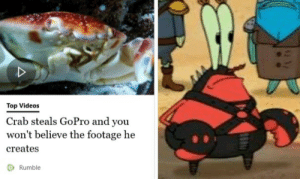 Videos, GoPro, and Top: Top Videos  Crab steals GoPro and you  won't believe the footage he  creates  O Rumble A Masterpiece