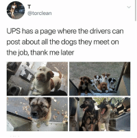 Yes, I checked, it exists, go now. (FB UPSDogs linked in bio) Twitter torclean: @torclean  UPS has a page where the drivers can  post about all the dogs they meet on  the job, thank me later Yes, I checked, it exists, go now. (FB UPSDogs linked in bio) Twitter torclean